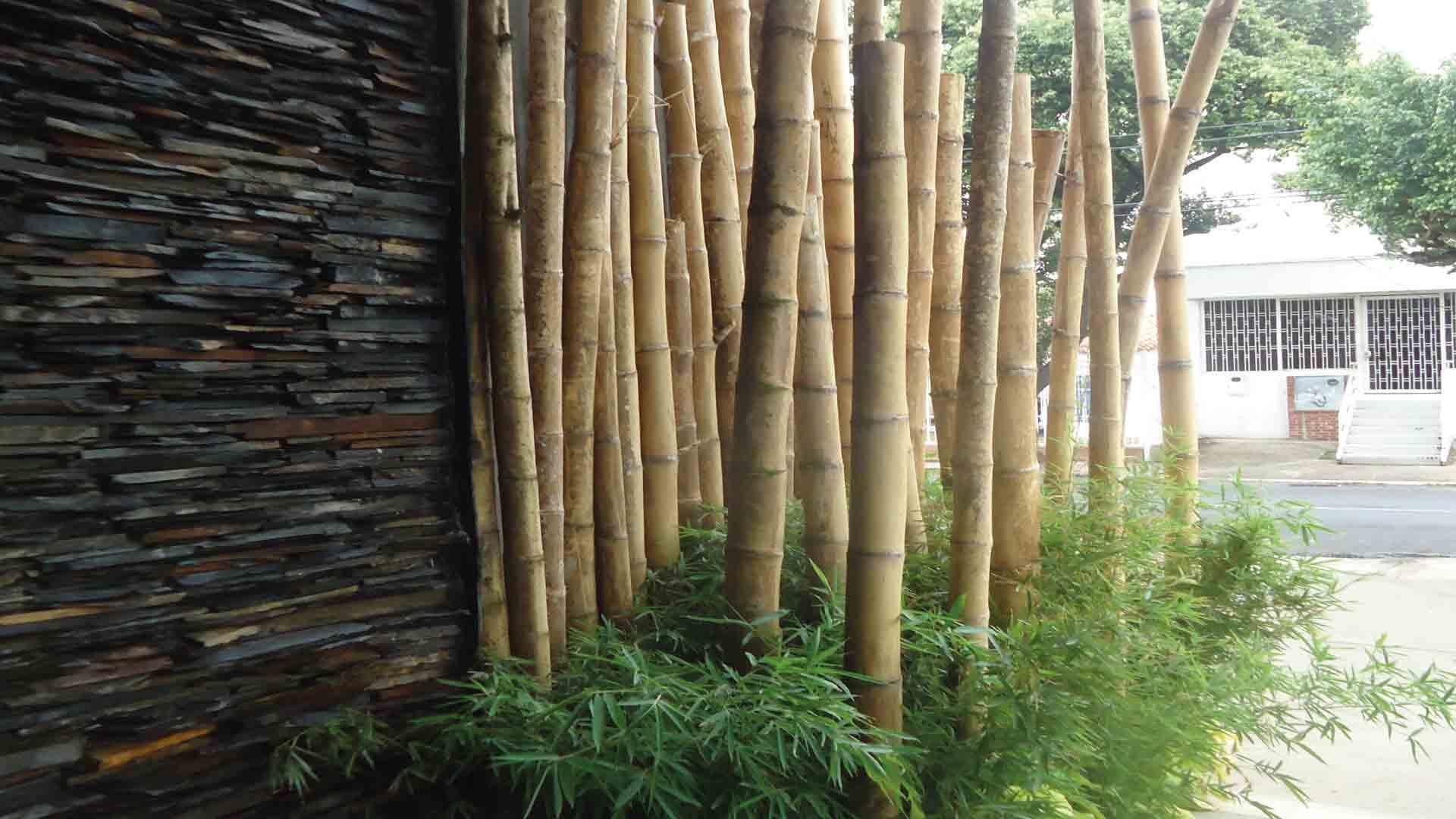 Jardines cpa jardines verticales cubiertas ajardinadas for Jardines verticales historia